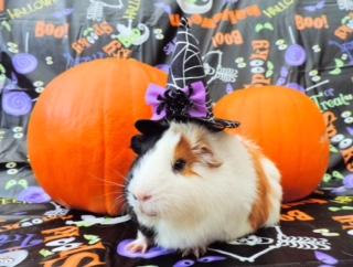 halloween piggy