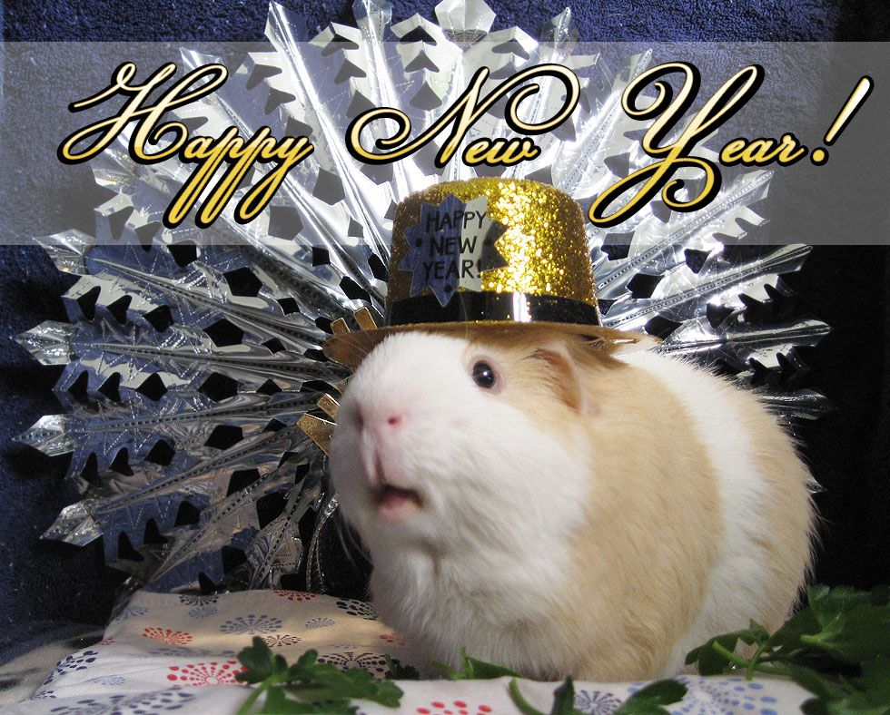 piggy new year
