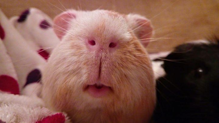 chilli nose