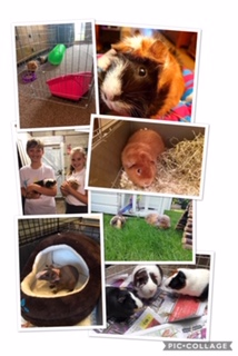 piggy collage