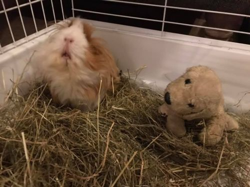 primrose and teddy