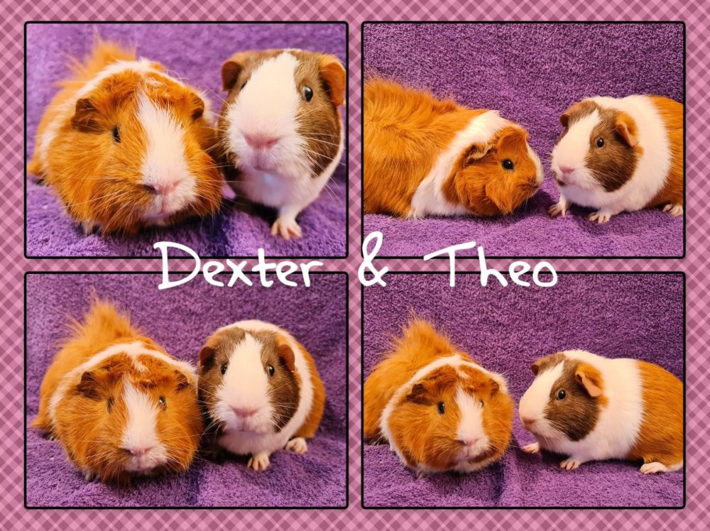 theo and dexter