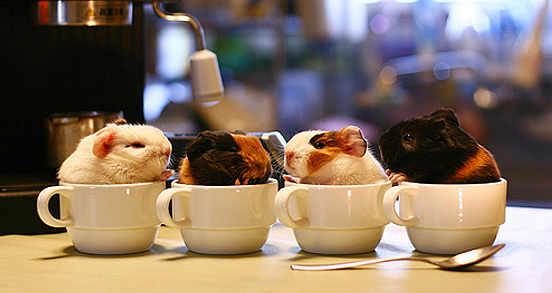 piggie cups