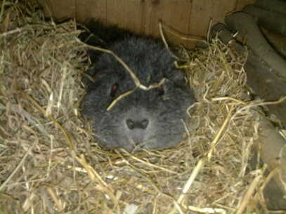 greg in hay