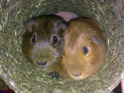 marley and jacob