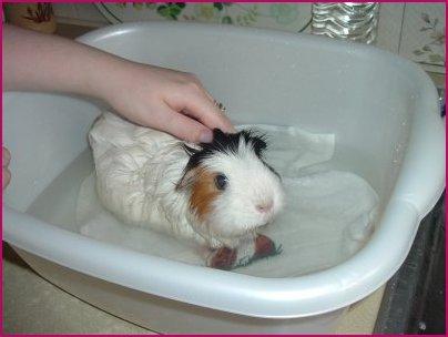 bath piggy