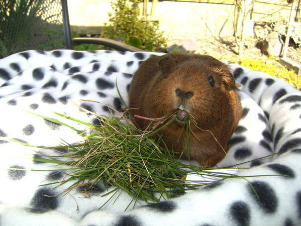 sweetie with grass
