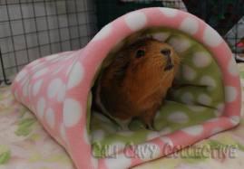 piggy cosy