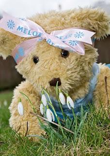 melody daisy