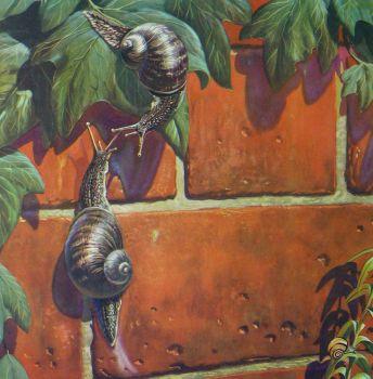 Vintage School Poster 1938 - Snails