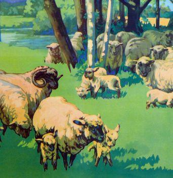 Vintage School Poster 1938 - Sheep & Lambs