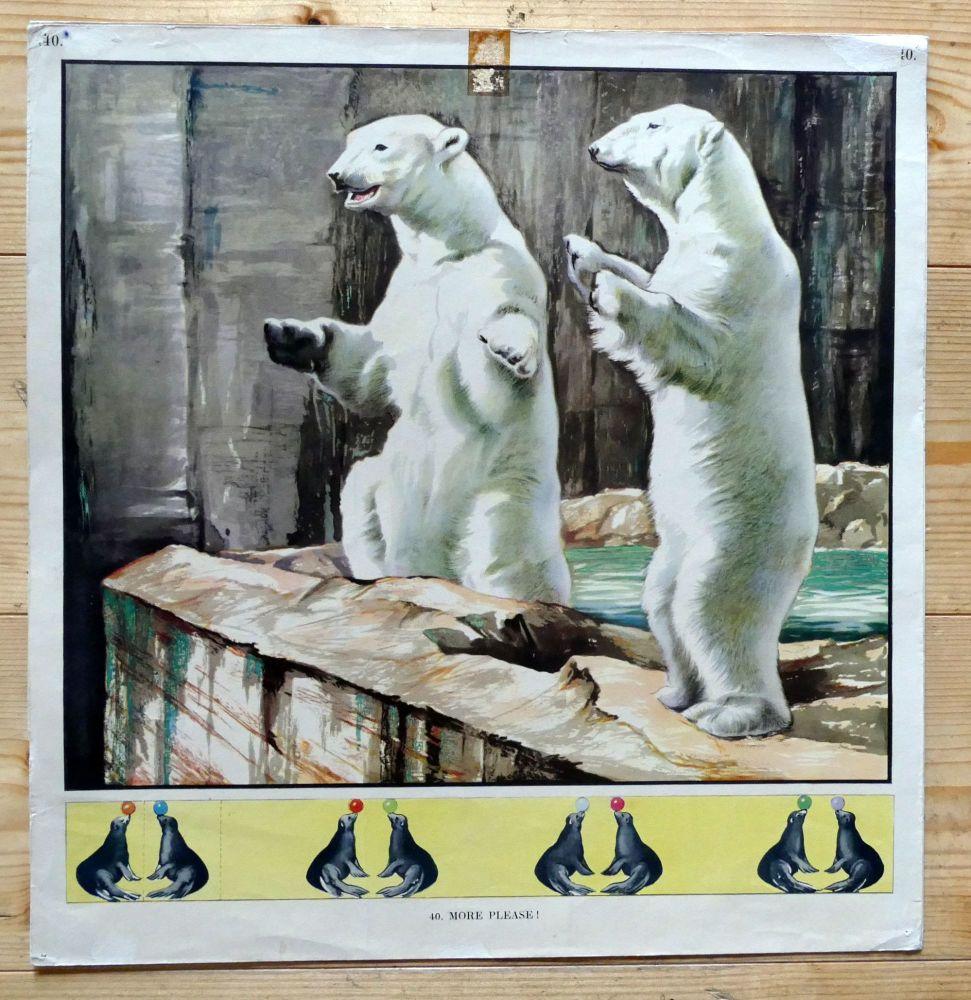 Vintage School Poster - Polar Bears