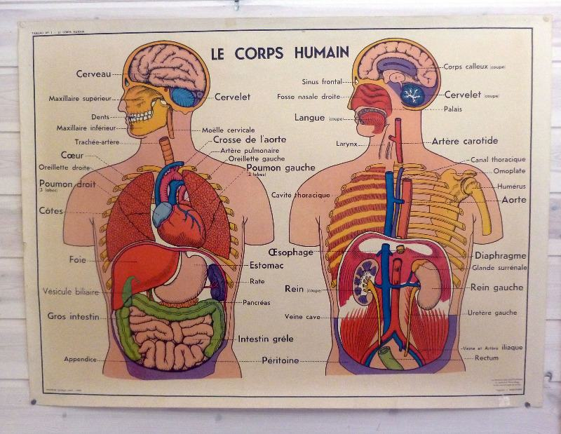 vintage french medical and anatomy posters