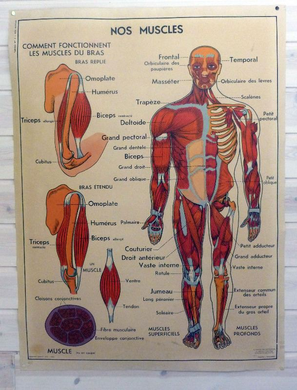 vintage-frnch-medical-poster-body-4