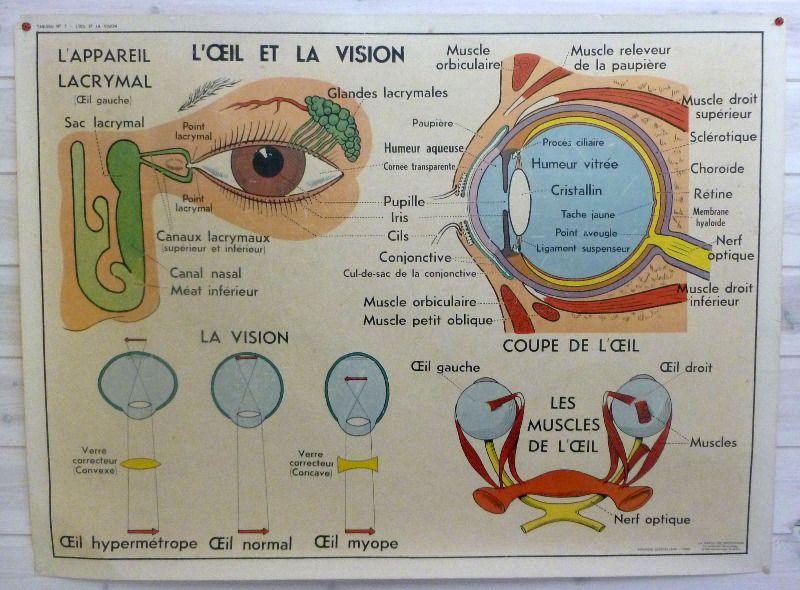 vintage-frnch-medical-poster-eye-1