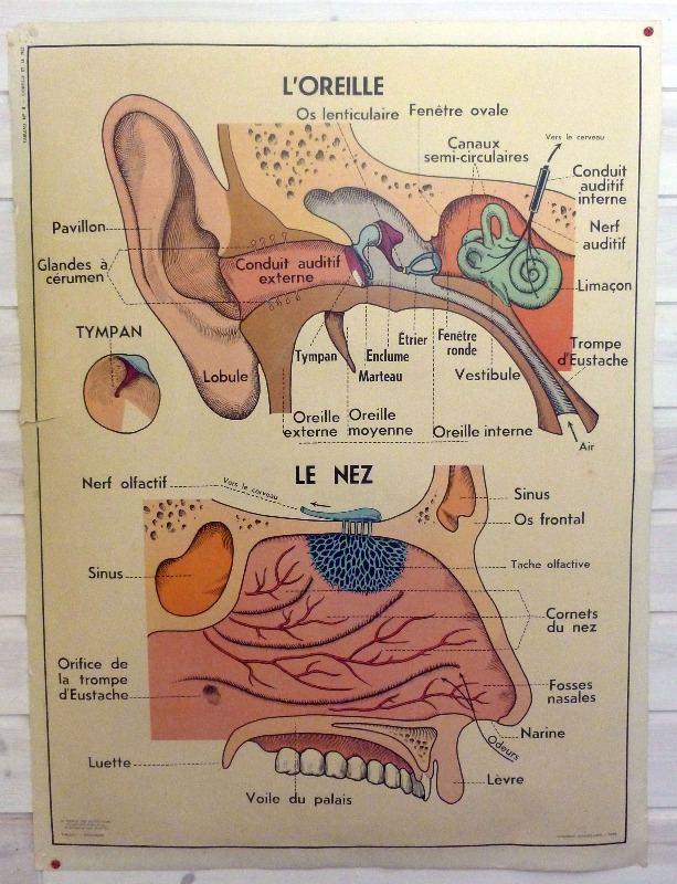 vintage-frnch-medical-poster-eye-5