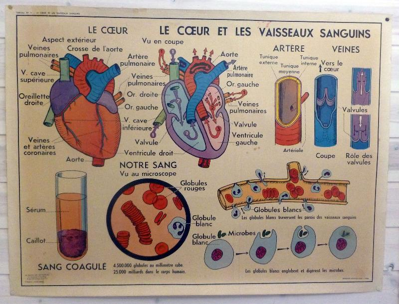 vintage-frnch-medical-poster-heart-3