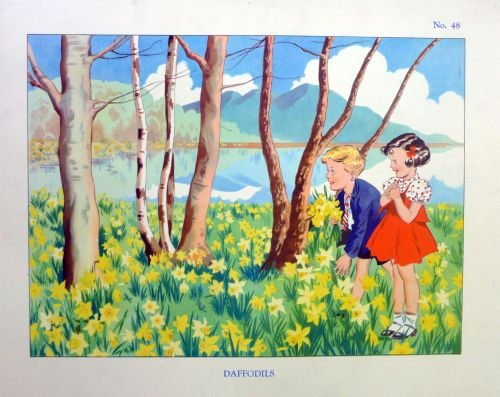 Vintage School Poster 1930's/40's - Daffodils