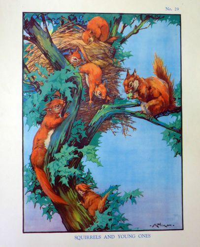 Vintage School Poster 1938 - Squirrels
