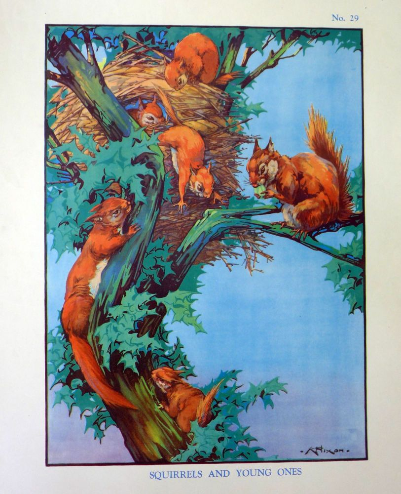 Vintage School Poster 1938 - Squirrels