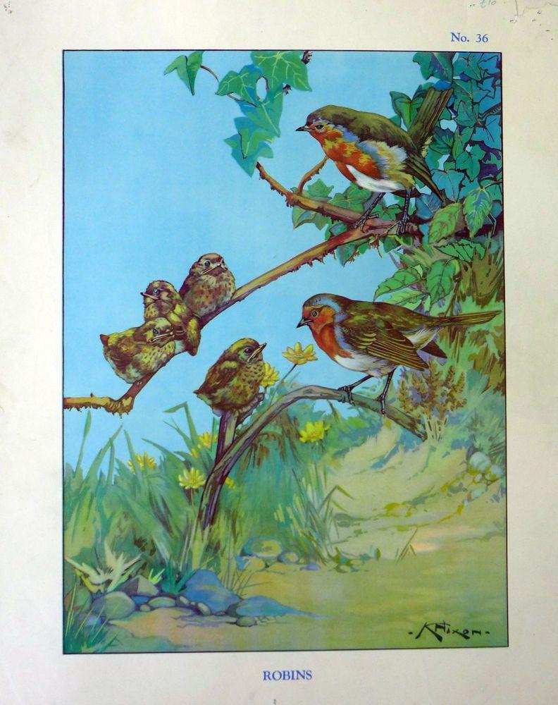 Vintage School Poster 1938 - Robins