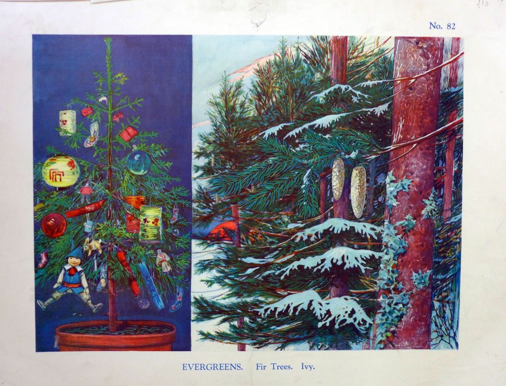Vintage School Poster 1938 - Fir Trees & Ivy