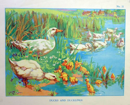 Vintage School Poster 1938 - Ducks & Ducklings