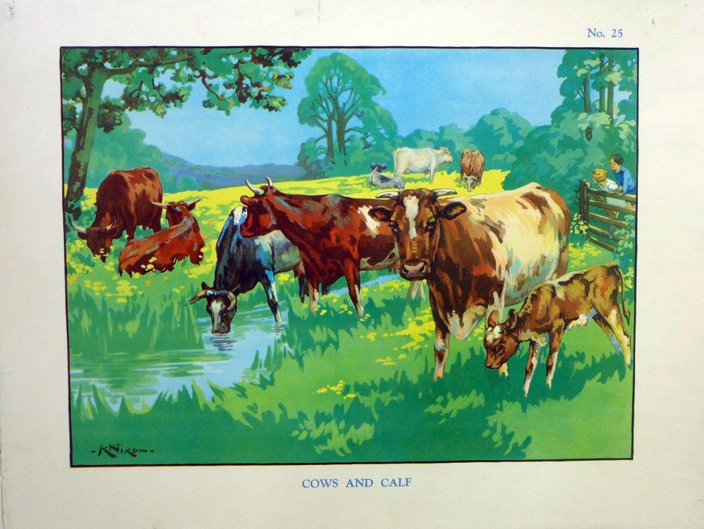 Vintage School Poster 1938 - Cows & Calf