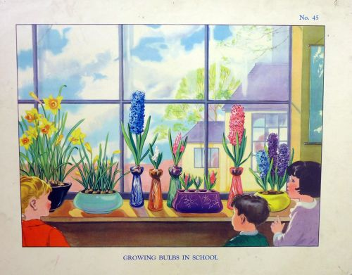 Vintage School Poster 1938 - Growing Bulbs in School