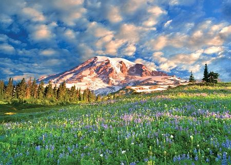 Wildflowers at Mount Rainier Jigsaw Puzzle image