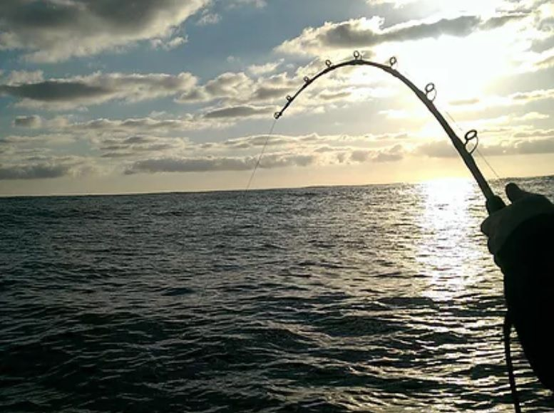 Deep Drop Fishing Equipment Suppliers