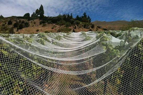 Bird Netting For Sale in Perth, Western Australia