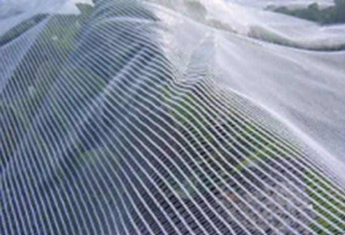 Fruit Fly Nets For Sale Australia