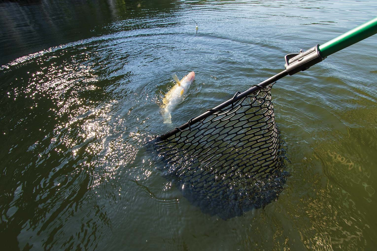 Landing Nets  For Sale in Perth, Western Australia