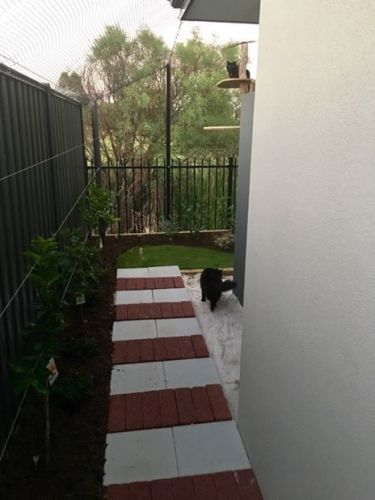 Cat Curfew Could Hit Perth, Western Australia