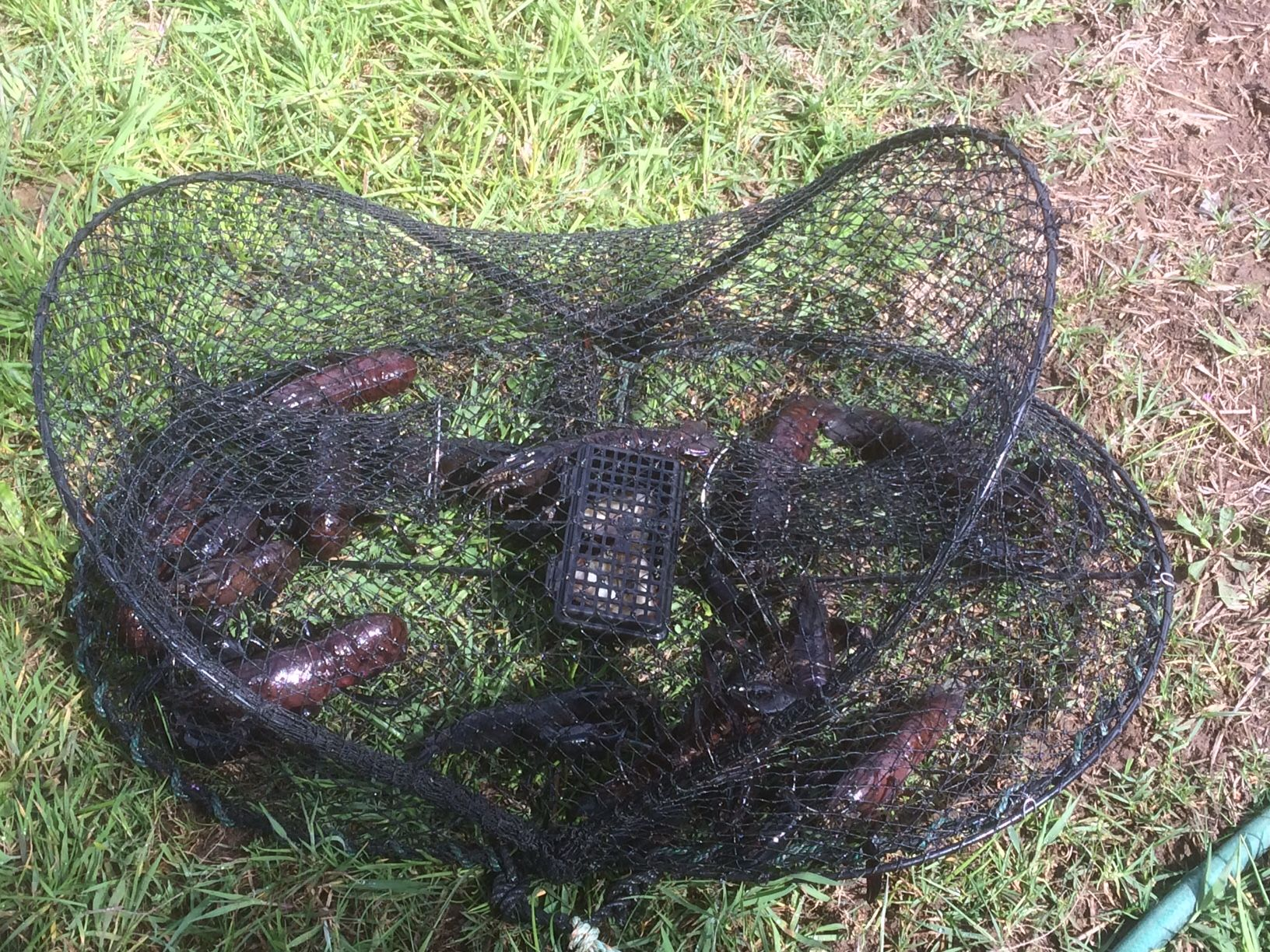 Fish, Marron, Octopus Traps For Sale Australia