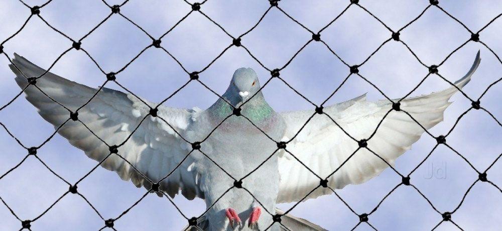 Bird Netting For Sale Australia