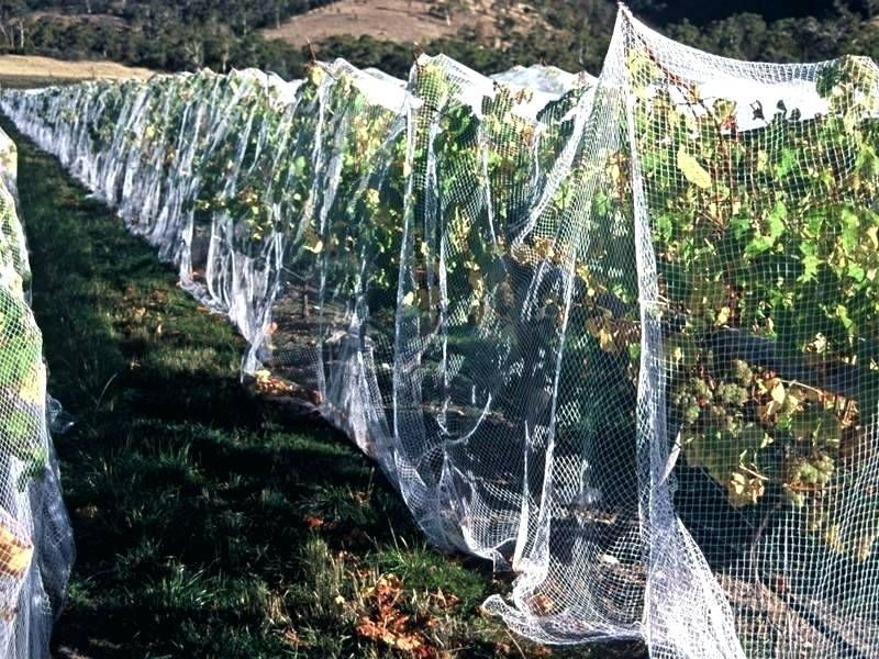 Fruit Tree and Orchard Nets For Sale Australia