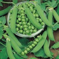 Lots of choice at Suttons Seeds - don't these peas look absolutely delicious?