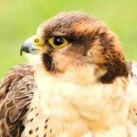 Get into the countryside with falconry handling