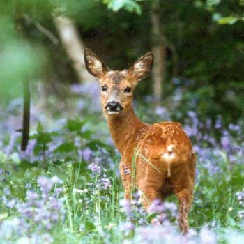 Enjoy a wildlife experience in West Sussex