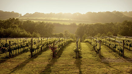 Enjoy this Luxury Coach Tour of Sussex Vineyards and Wine Tasting for Two