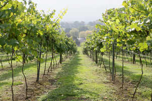 Click here for info on this Vineyard Tasting and Tour for Two
