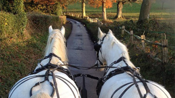 Have a go yourself with a Pairs Horse Drawn Driving Lesson