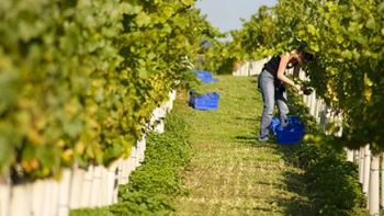 Winemaker Vineyard Tour for Two at Stopham Estate, West Sussex