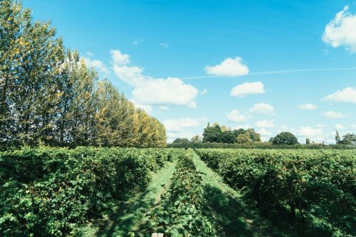 Take a tour of the vineyard in East Sussex