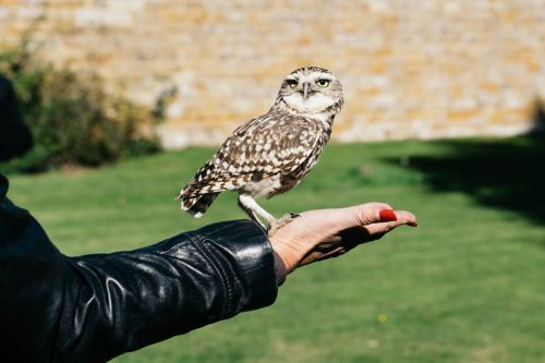 Introduction to Owl Handling for Two in KENT