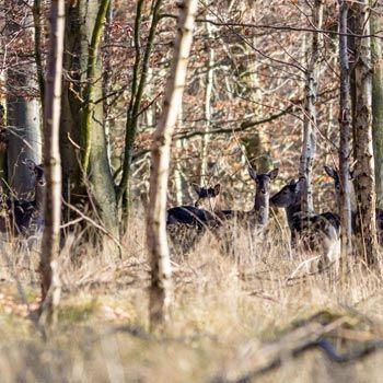 Have a Wildlife Experience near Midhurst