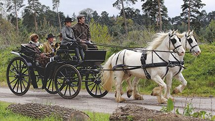 For horse lovers, how about a Horse Drawn Carriage Ride?
