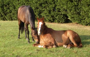 Help retired racehorses at the Racehorse Sanctuary in Sussex